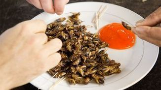 Commerce au régime sans insecte - Programmes | Entomophagy: Edible Insects and the Future of Food | Scoop.it