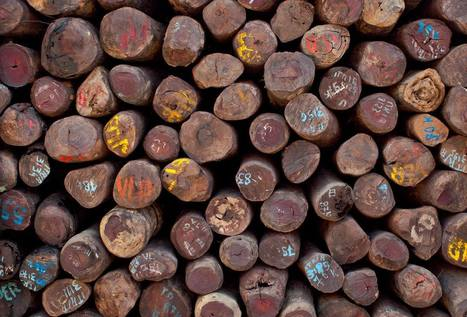 Singapore releases 30,000 logs of illegal Malagasy rosewood - EIA | Sustainable Development | Scoop.it