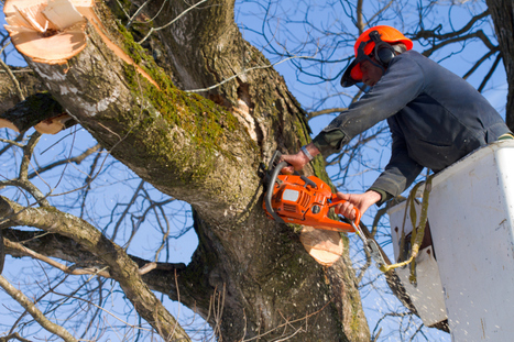 What Exactly Is Tree Lopping? » CJ S Tree Service of Omaha | Tree Service | Scoop.it