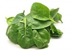 UNDER THE MICROSCOPE - What is Spinach? - MSC Nutrition   Expert nutrition and exercise blog   Scoop.it