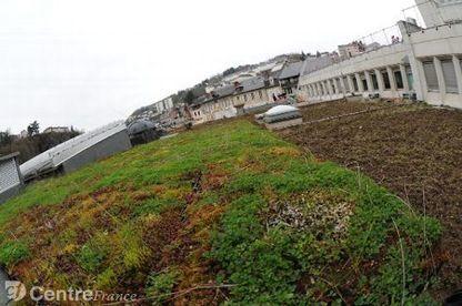 Les végétaux en milieu périurbain   décroissance   Scoop.it