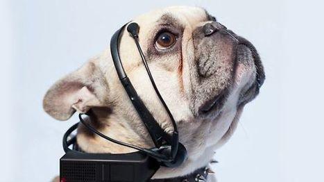 Dog-to-English translator funded on Indiegogo   Chilean Spanish   Scoop.it