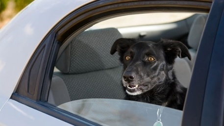 New study suggests dogs have horrible memory - WDSU New Orleans | Dog Lovers | Scoop.it