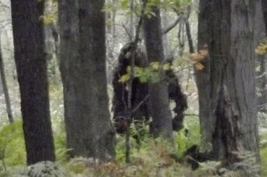 OMG Bigfoot is Real? New Study Proves 'Sasquatch DNA' | Legends and Myths | Scoop.it