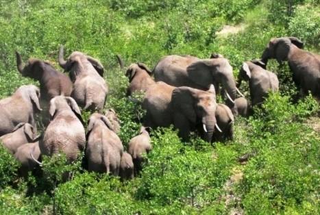 Conflits homme-faune : Annonce d'un plan national de gestion - Gabonreview.com   Actualité du Gabon     Afrique: développement durable et environnement   Scoop.it