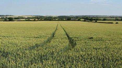 Le manque de diversité des semences pénalise la sécurité alimentaire | Chimie verte et agroécologie | Scoop.it