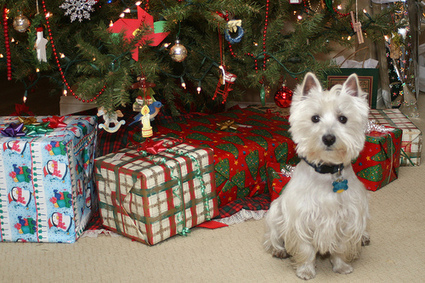 Making Christmas Safe For Your Pets | Pets – Your Little Friends | Scoop.it