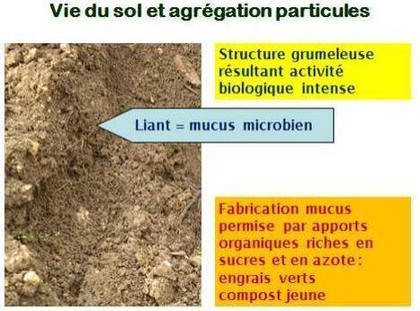 Le mucus microbien : Humus et vie du sol   Oz 'être   Scoop.it