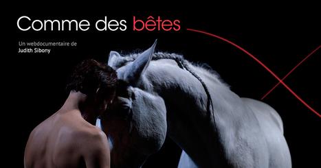 Comme des Bêtes | Nouveaux formats | Scoop.it
