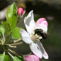 Crown Bees Launches Crowdfunding Campaign to Help Save the Bees | Garden Media Group | Scoop.it
