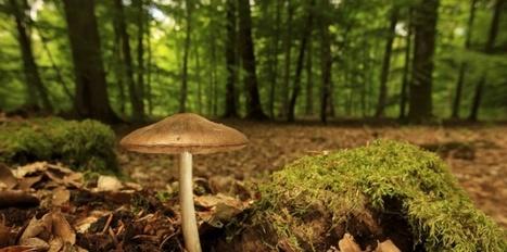 Entre les champignons et les arbres, une symbiose pas vraiment consentante | pour mon jardin | Scoop.it