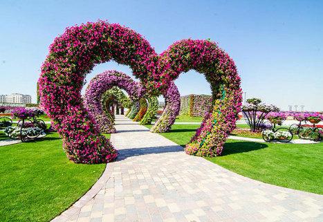 Dubai to launch world's largest vertical garden   Local Flower Shop Online   Scoop.it