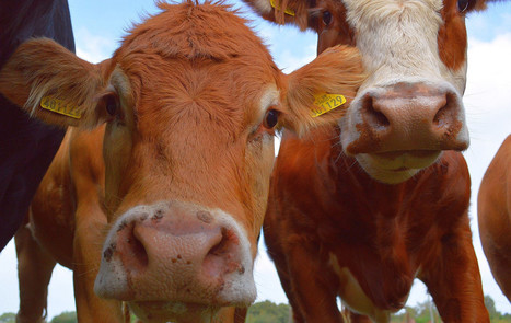 Here's Why Grass-Fed Beef is Just as Bad for the Environment as Grain-Fed | Healing our planet | Scoop.it