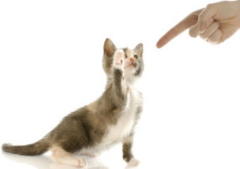 Your cat is a massive environmental hazard | Environmental progress | Scoop.it