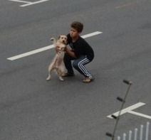 Un enfant se jette sur la route et sauve un chien - Wamiz | CaniCatNews-actualité | Scoop.it