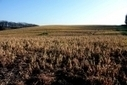 Vallée du Geer. Vous avez déjà observé un champ traité au Roundup ? Non ? Alors, on va vous en montrer un | Toxique, soyons vigilant ! | Scoop.it