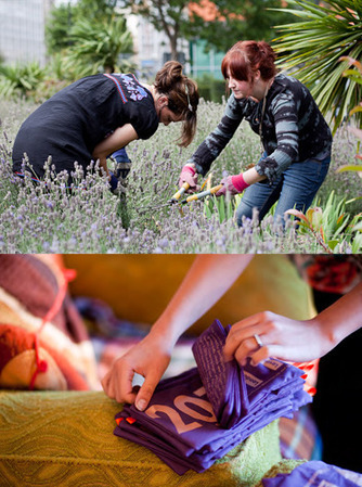 Guerrilla Gardening 2011 Lavender Pillows | D.I.Y. Herbalism | Scoop.it