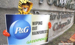 P&G to Eliminate Deforestation From Palm Oil Products | sustainablity | Scoop.it
