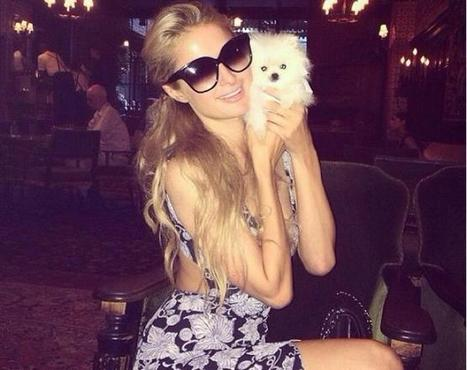 Paris Hilton ha un nuovo amore: un cane da 13mila dollari - Tgcom24 | Dog Style | Scoop.it
