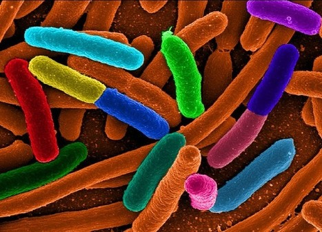 The Seven Wonders of the Microbe World | technologies | Scoop.it