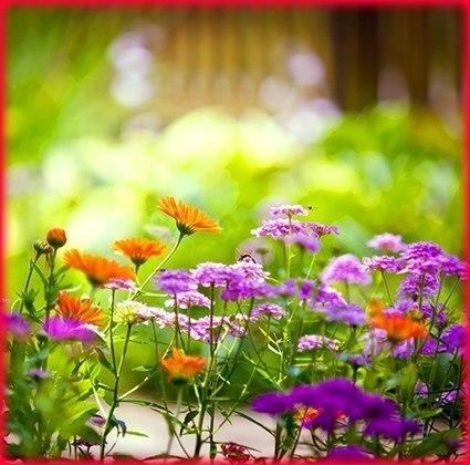Calendula - (Marigolds)   Holistic & Alternative Health   Scoop.it