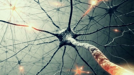 Application of viral vectors to the study of neural connectivities and neural circuits in the marmoset brain   Vectorology - GEG Tech top picks   Scoop.it