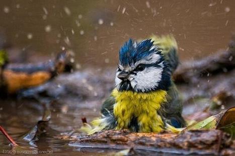 Twitter / IrinaGreenVoice: #Wildlife picture of the day: ... | Wind turbines | Scoop.it