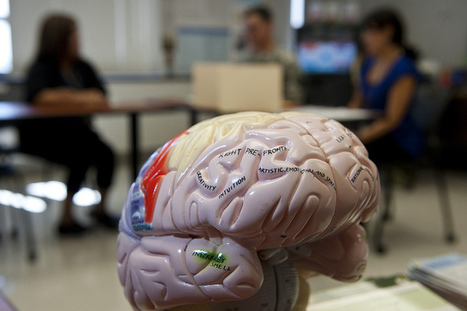 Variations in Neuronal Networks Could Explain Traumatic Brain ... | TBI | Scoop.it