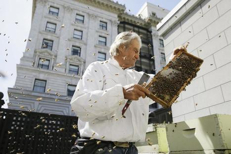 Hotels For Bees | enjoy yourself | Scoop.it