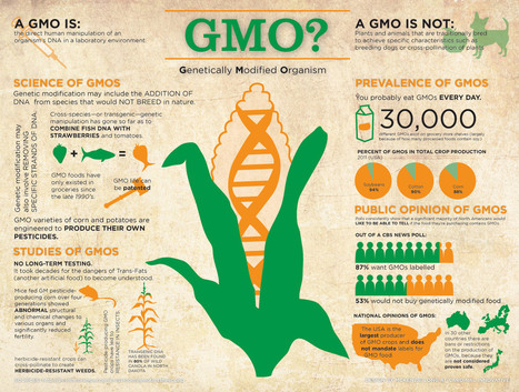 What is a GMO? (Infographic) - Karma Jello | Car Seat | Scoop.it