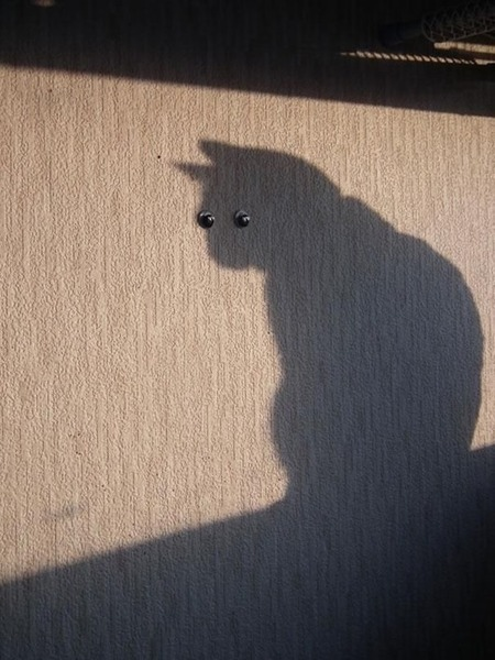 Jokes shadows | inspiration photos | picturescollections | Scoop.it