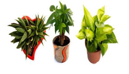 Online Plant Store in Delhi | DealGali | Scoop.it
