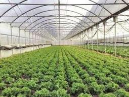 Agri futurologist all set to introduce next generation cropping technologies in India - The Times of India | Vertical Farm - Food Factory | Scoop.it