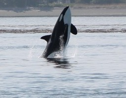 Titan Explores | #Orca #Avenger @VidarOceans | Scoop.it