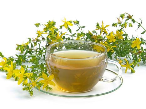 With St. John's Wort Tea Against Women's Diseases | ForHealthBenefits | Scoop.it