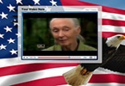 Jane Goodall and Her Chimps | fazuco | Scoop.it