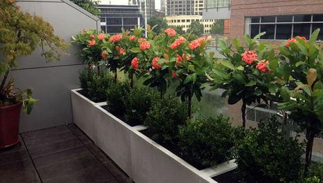 3 Φυτά Βεράντας που δεν Απαιτούν Νερό - Ανακαίνιση Σπιτιού | Customer Works | Scoop.it