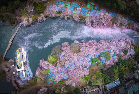 Fallen Cherry Blossom Petals Fill a Lake in Japan for Naturally Beautiful Scenes From Above | Le It e Amo ✪ | Scoop.it