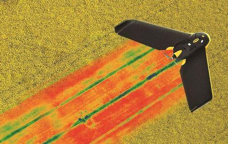 Parrot presenta un sensor enfocado a la agricultura de precisión   Agricultura   Scoop.it