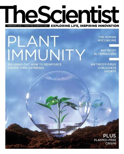 Plant Immunity on the cover of The Scientist! (2016) | Plants and Microbes | Scoop.it