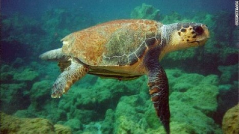90-year-old woman battles to save Turkey's loggerhead turtles - CNN | Coral Reef Ecology | Scoop.it