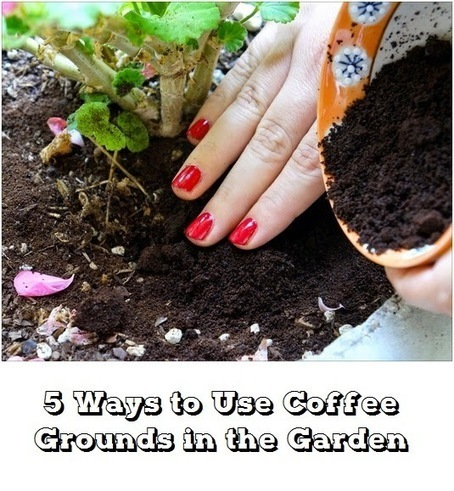 Ways to use coffee grounds in the garden #Organic_Gardening | World In Green | Scoop.it