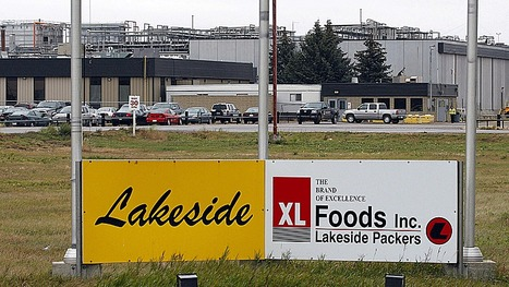 XL Foods to bring back 800 laid off Alberta workers | What's News in Alberta | Scoop.it
