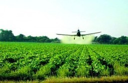 5 Green Tips for avoiding Insecticides | Caelus Green Room | 100 Acre Wood | Scoop.it