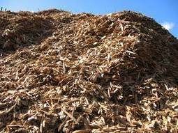 Biomass and Sustainability | AREA News Digest | Scoop.it