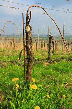 Du 50cl pour fêter les 50 vendredis du vin de pays du calvados   Vendredis du Vin   Scoop.it