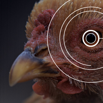 A Bird's-Eye View of Nature's Hidden Order | Amazing Science | Scoop.it