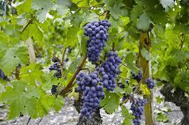 Distinguer le vin des autres boissons alcoolisées - Lavigne-mag   Champagne   Scoop.it