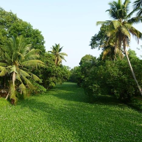 Viajar a India: Amritapuri, el destino de Amma | Aventura en India | Scoop.it