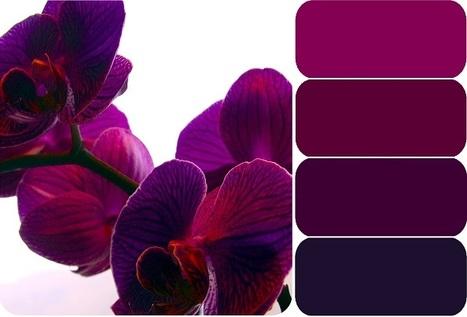 Pictaculous - A Color Palette Generator (courtesy of MailChimp) | Techno Web | Scoop.it